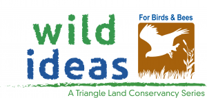Wild Ideas for Birds and Bees Logo