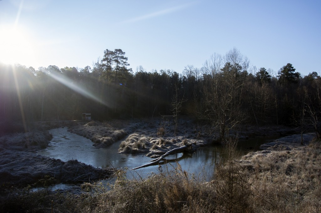 Brumley Forest Nature Preserve January 2016