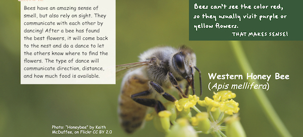 Bees can't see the color red so they usually visit purple or yellow flowers.