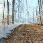 Controlled Burn at Horton Grove Nature Preserve