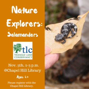 nature-explorers-salamanders