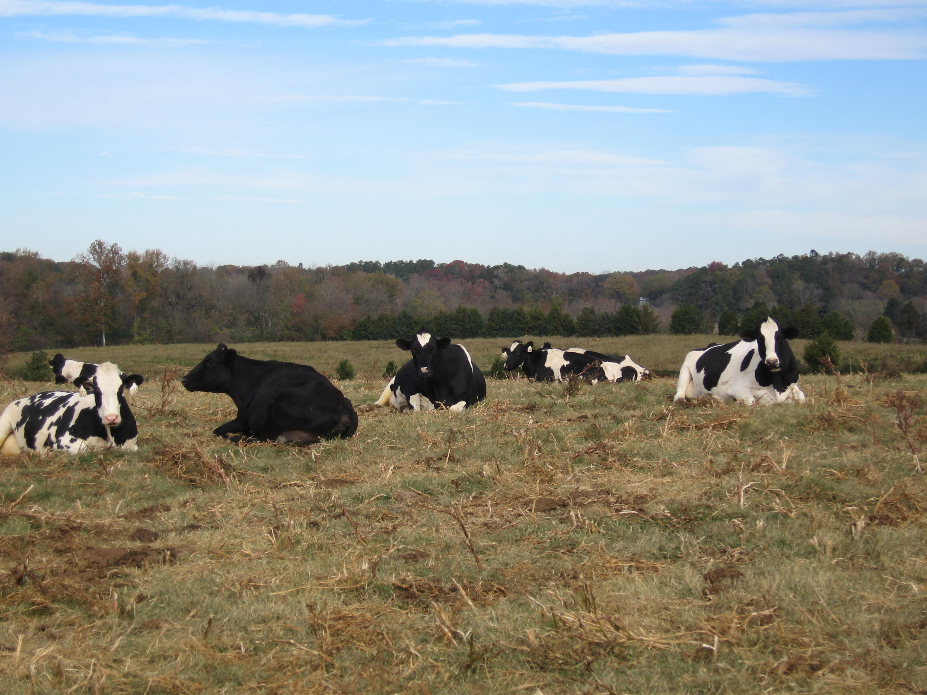 204 Acres Of Farmland Protected In Silk Hope